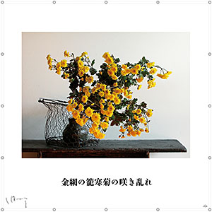 味岡伸太郎  『1月(寒菊)』キャンバス