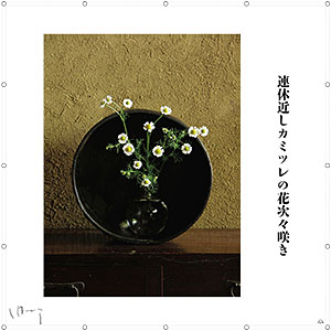 味岡伸太郎  『4月(カミツレ)』キャンバス